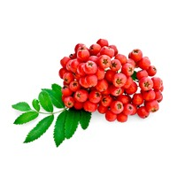 https://www.s72gin.com/wp-content/uploads/2018/09/rowanberry.jpg
